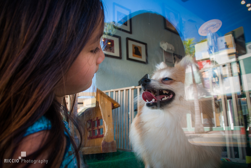 Young child admiring puppy in window of pet store