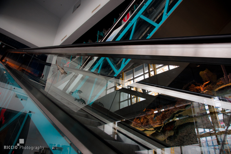 Escalator in Ft Lauderdale Science Museum. Photographed by Maurizio Riccio